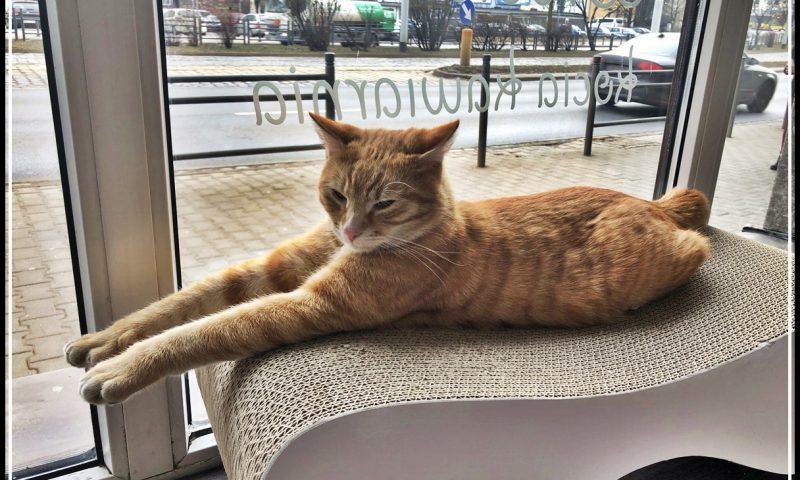 Kot Cafe Wrocław – pierwsza kocia kawiarnia we Wrocławiu