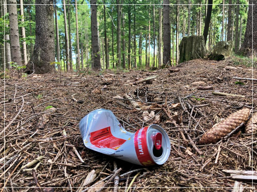 Śmieci w lesie / Wrocław Kobiecym Okiem