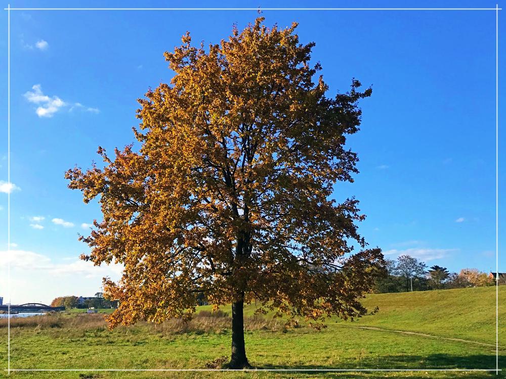 Jesienne drzewko Wrocław Kobiecym Okiem